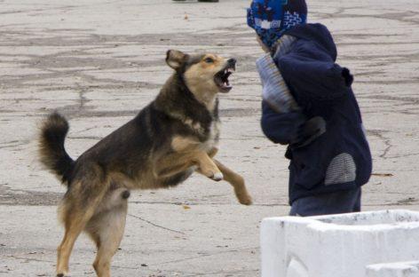 Кто в Сальске отловит бродячих собак?