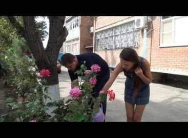 «Я люблю этот город»: как подготовились жильцы дома по улице Фрунзе, 35