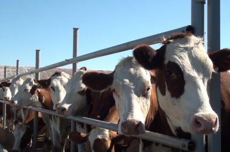 Программу по грантовой поддержке фермеров планируется продлить до 2030 года