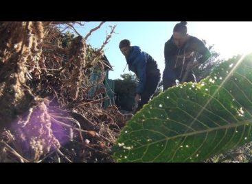 В Сальске студенты-волонтеры помогли вдове ветерана