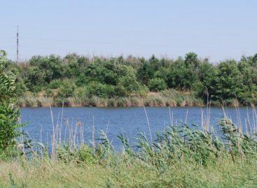 В Сальске в черте города может появиться рыбоводный участок