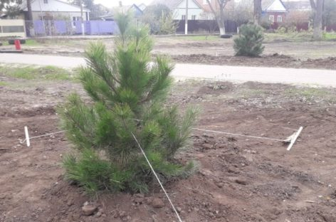 Сальчан просят беречь молодые саженцы  нового парка