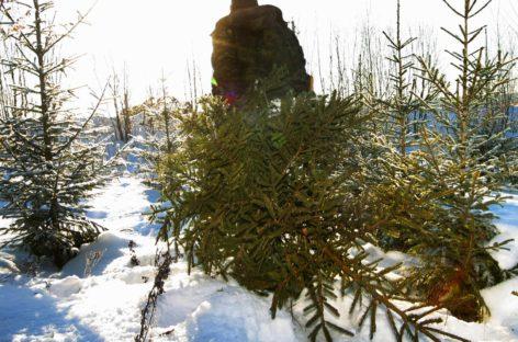 Ёлка перед Новым годом может обойтись в 5.000 рублей