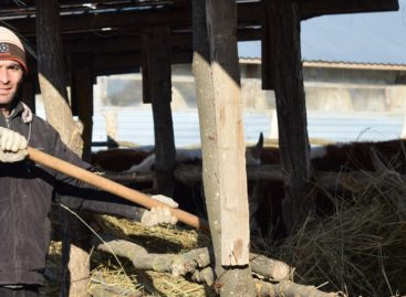 В Сальском районе растёт число семейных животноводческих ферм