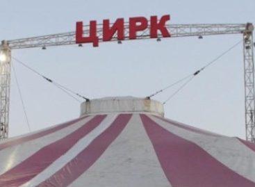 Что делать, если представление цирка-шапито оставило неприятные впечатления?