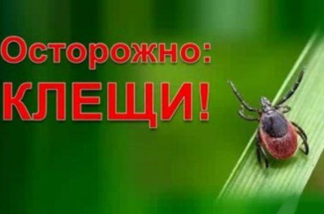Медики предупреждают сальчан, что с потеплением активизируются клещи