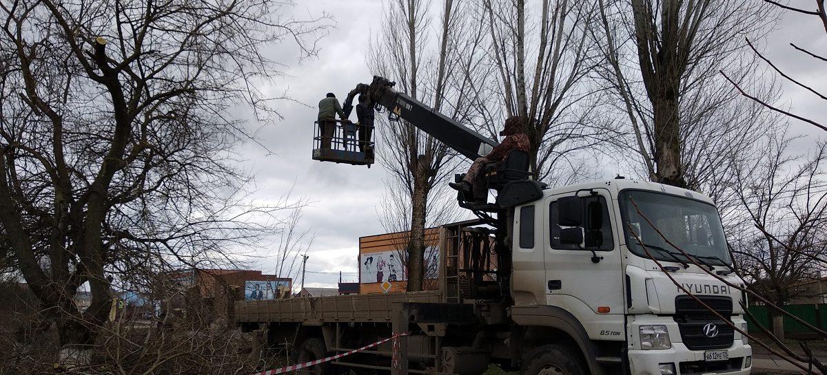 Жители Сальска обеспокоены ликвидацией большого количества деревьев в  центре города