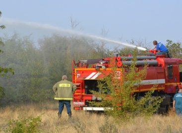 Въезд в лесные массивы Сальского района скоро снова запретят