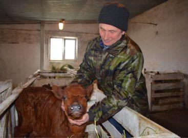 В хозяйстве «Русь» развивают животноводство и ведут весенне-полевые работы