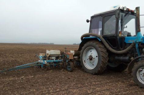 Осенний сев в разгаре: труженики района закладывают основу под урожай будущего года