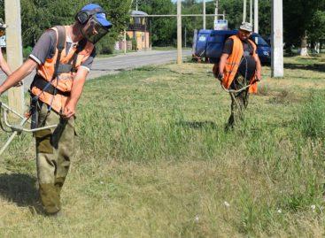 Сальчане жалуются, что город зарос травой