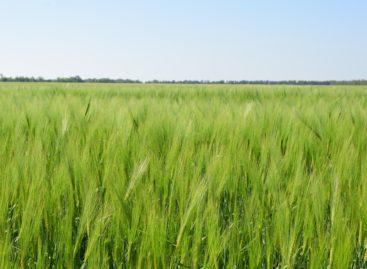 Труженики хозяйства «Бараниковское» активно ведут полевые работы