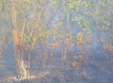 В Сальском районе действует пожароопасный режим