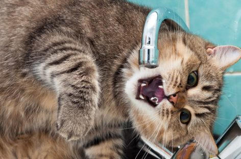 В Сальске, в микрорайоне Кучерда, 22 мая будет ограничена подача воды
