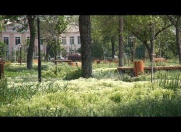 Парк на Ванцетти: Ново-Сальск обеспокоен