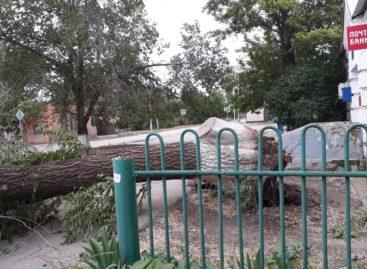 На Ново-Сальске на «Приору» упало дерево