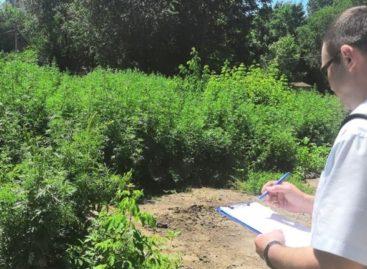 За нескошенную сорную траву виновные оштрафованы почти на полмиллиона рублей