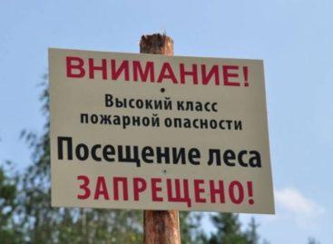 В Ростовской области введен режим ограничения пребывания граждан в лесах