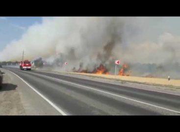 В Сальском районе за 10 минут сгорело поле пшеницы