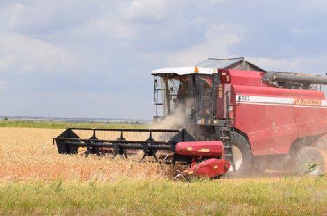 Аграрии Сальского района обмолотили свыше 97% площадей ранних зерновых