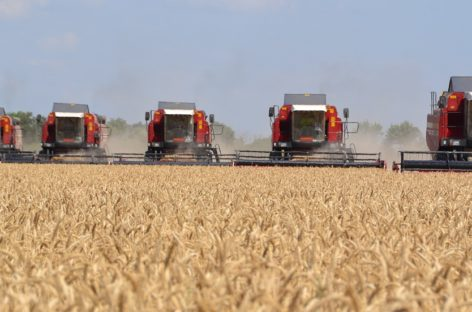 Труженики Сальского района завершают уборку ранних зерновых