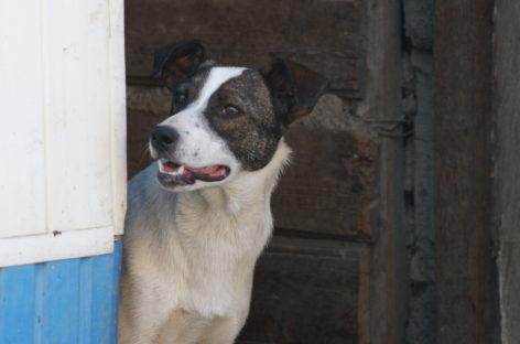 Предотвратить медленное убийство: сальские волонтеры — о бездомных животных