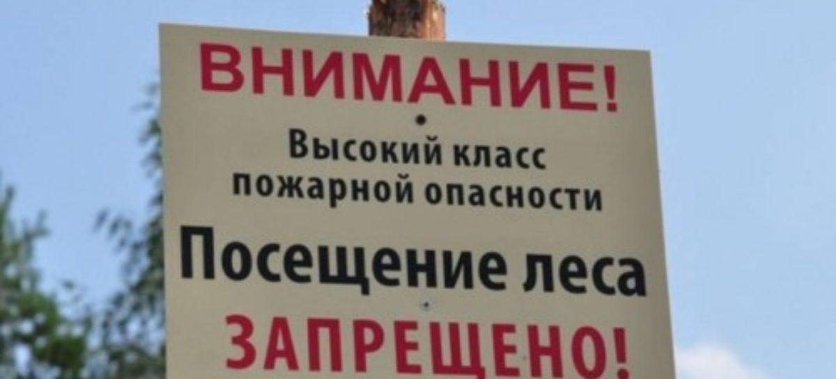 В лесах Дона продлили режим ограничения пребывания граждан