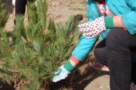 В Ростовской области стартует акция «Живи, лес!»