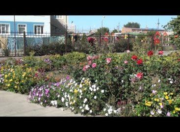 Самые красивые дворы: продолжаем знакомить с участниками конкурса «Я люблю этот город»
