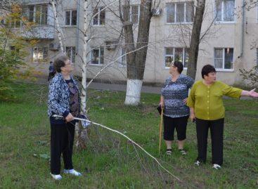 Кто должен спиливать сухие деревья и убирать на частной территории?
