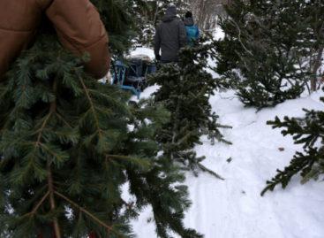 Маленькой елочке не страшно зимой: в регионе перед Новым годом усилили охрану хвойных насаждений