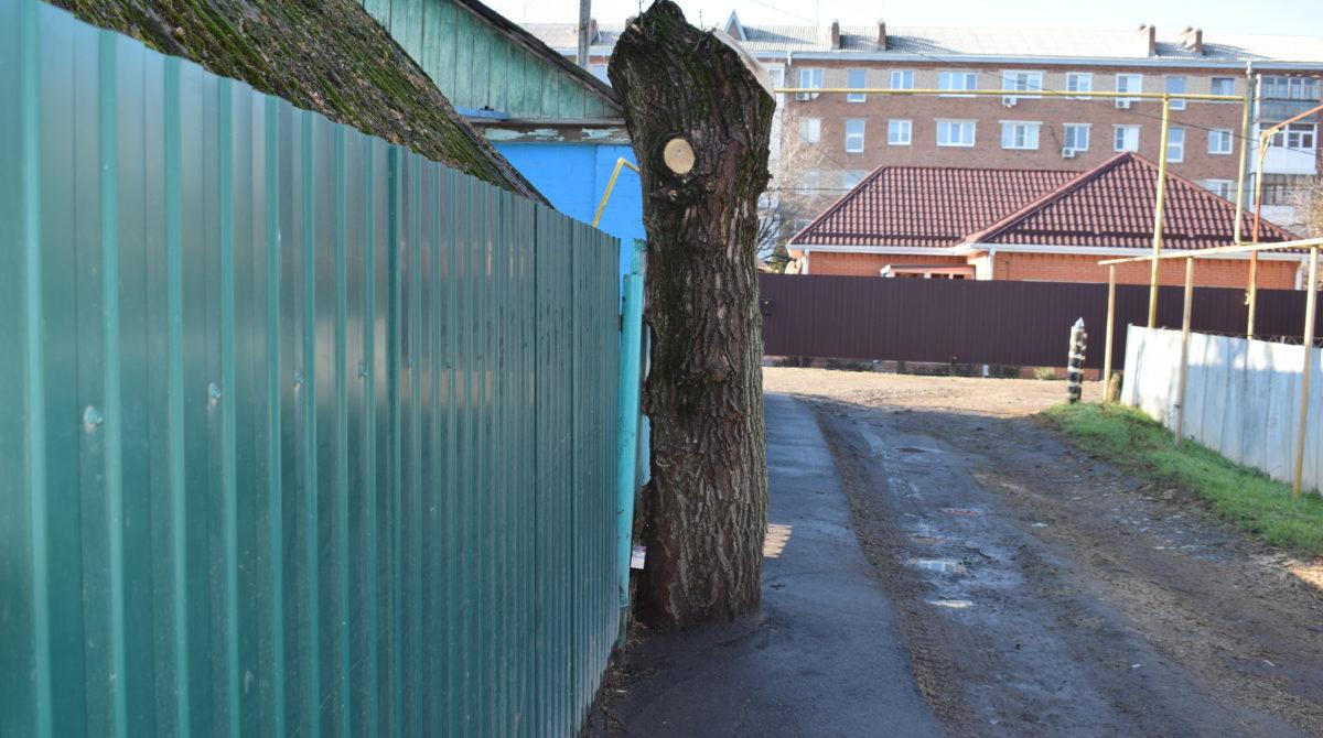 Жители Новосельского просили спилить дерево, но  удивились, когда их пожелание выполнили