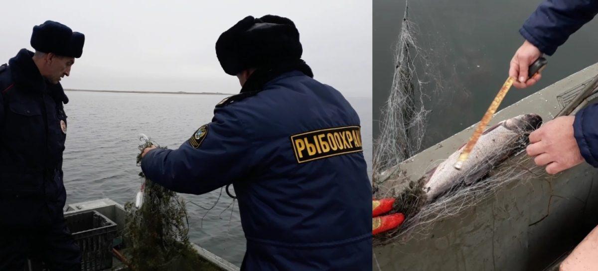 В Сальском районе сотрудники рыбоохраны провели очередной рейд