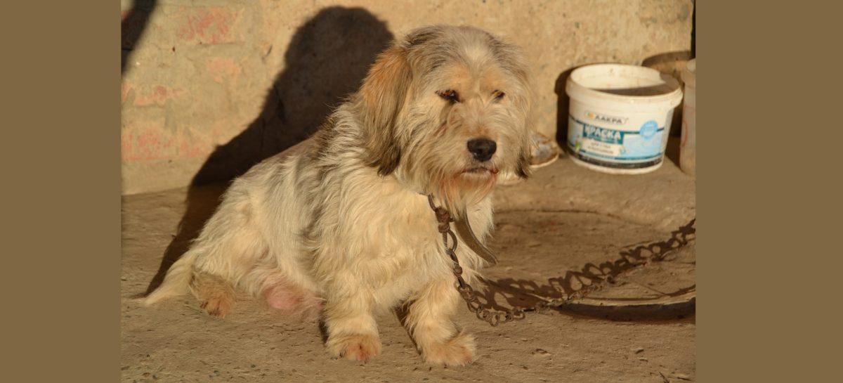 Редакция «Сальской степи» ищет хозяина для собачки Лизы