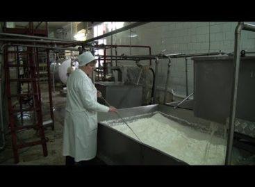 Как живет сальский молзавод? Репортаж с производства