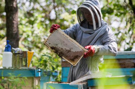 Сальских пчеловодов приглашают в Ростов