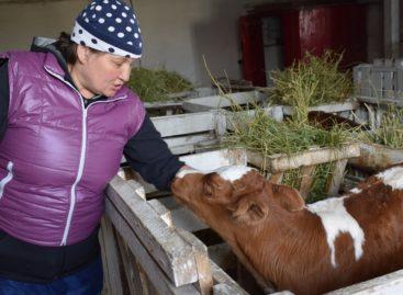 В хозяйстве «Русь» подходит к концу зимовка КРС и продолжаются полевые работы
