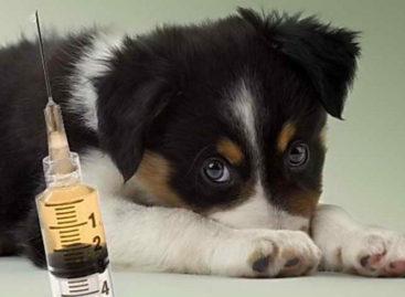 Сальские ветеринары просят владельцев животных быть внимательными