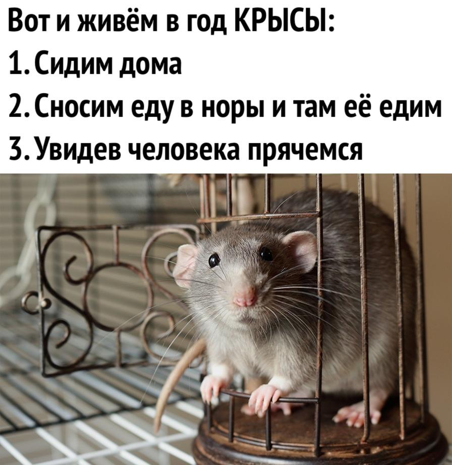 Анекдот Про Крысу