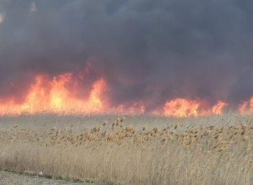 С начала года в Сальске и Сальском районе произошло 30 пожаров