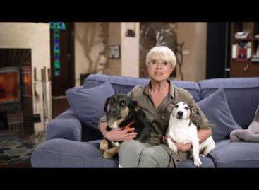 Илона Броневицкая: «Отношение к животным определяет цивилизованность и нравственность нации»