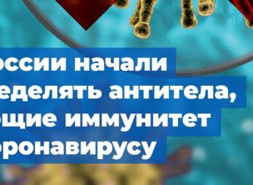 В России начали определять антитела, дающие иммунитет к коронавирусу