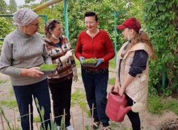 Как жители многоквартирных домов в Сальске украшают свои дворы