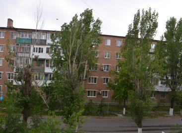 Засохший тополь «украшает» улицу Свободы в Сальске, недалеко от мемориала «Поклон»