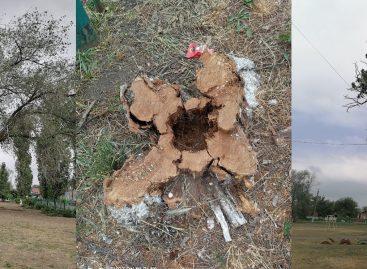 Зачем в школе № 6 в Сальске пилят деревья?