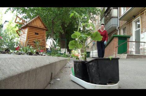 Сальчане заняты озеленением своих дворов