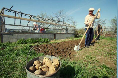 Изменения в Федеральный закон коснулись садоводов и огородников