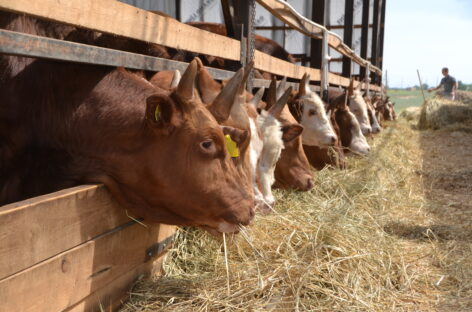 Молоко, зерно, малина: сальских фермеров становится больше