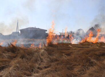 Сухая трава в летний зной может стать причиной пожара