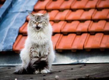 Сальчанка залезла на крышу за котом, а оттуда угодила в травматологию с открытым переломом